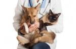 Curso Cuidados Clínicos no Pós-operatório de Cães e Gatos / 60 horas