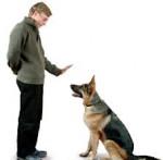 Curso Adestramento de Cães / 60 horas